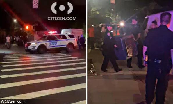 family rottweiler killed a baby boy in Brooklyn
